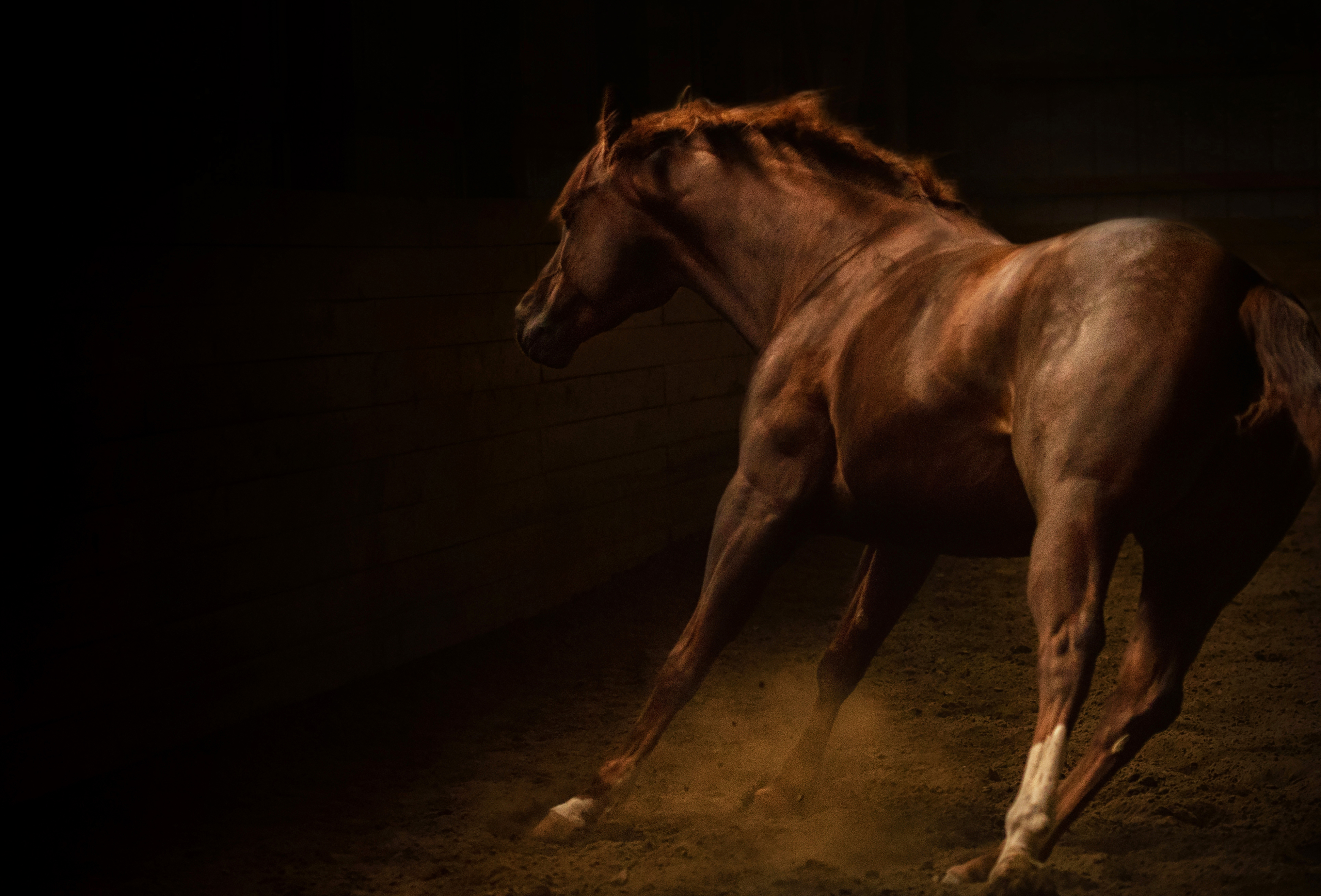 A and j equine photography Just Horses - A Directory of Everything Equine for New